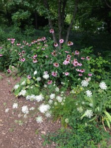 Queen Anne's Lace and Cone Flowers